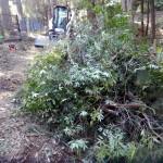 Piles before mulching